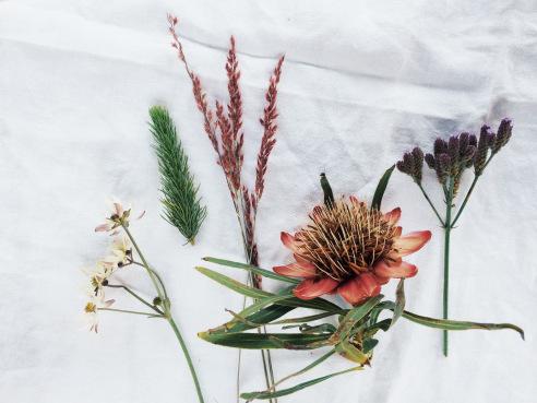Mpumalanga flowers