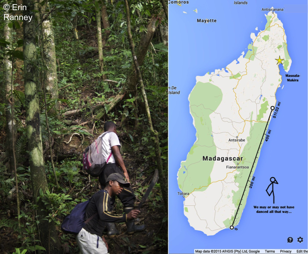 Left: Two local field assistants walking a trail during a lemur survey. Right: Representation of how far we walked during surveys, if we had started from southern Madagascar.