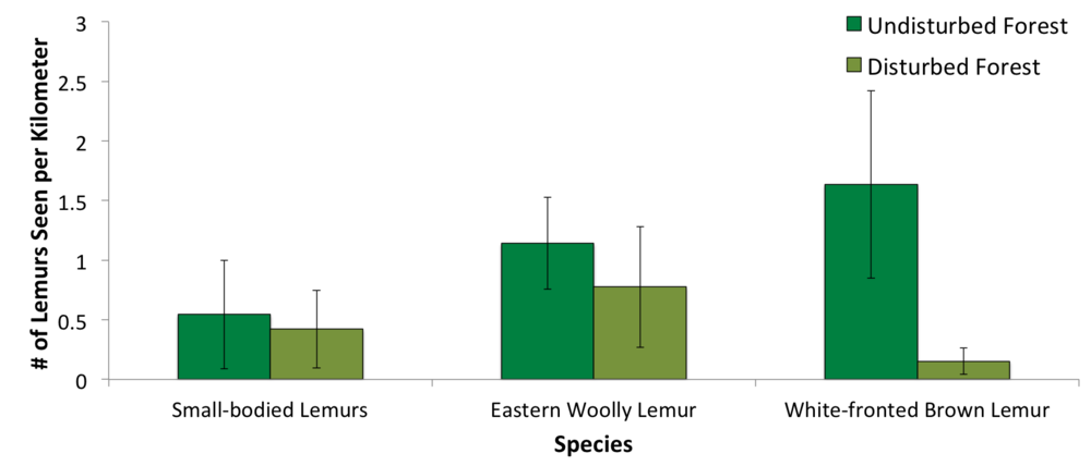 Although the error intervals overlap for small-bodied and eastern woolly lemurs, there is a distinct difference in how many white-fronted brown lemurs we saw while surveying in undisturbed versus disturbed forests.
