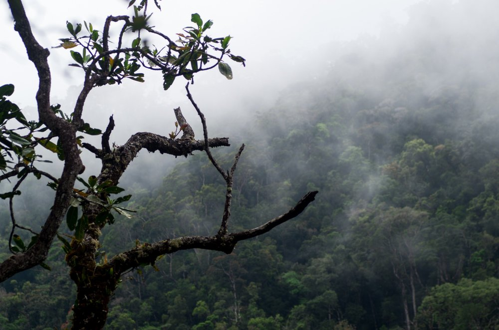 Deep in the Madagascar rainforest lies a mystery…