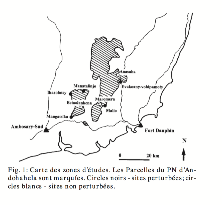 Map of study sites from Raharivololona and Ranaivosoa (2000). Circles represent sites surveyed (black — disturbed forest; white — undisturbed forest). The same sites were surveyed by Rasoarimanana (2005). The extent of the park is found within the sold lines.