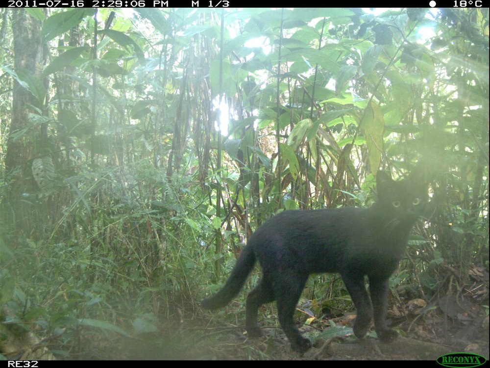 A kitty where it should not be (a remote Malagasy rainforest).