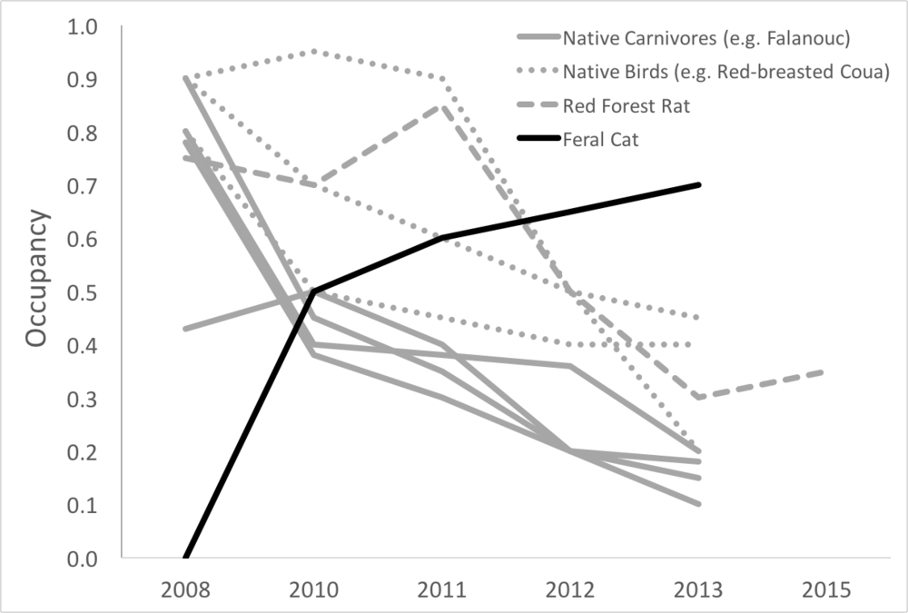 Declines in native carnivore, bird, and small mammal occupancy (gray) over six years at a site in northeastern Madagascar. Meanwhile, feral cats (black) became more common at the very same site.