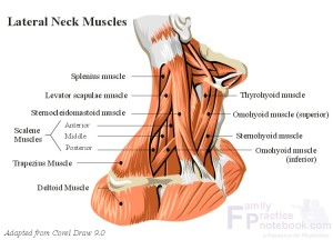 massage-for-neck-pain-300x216.jpg