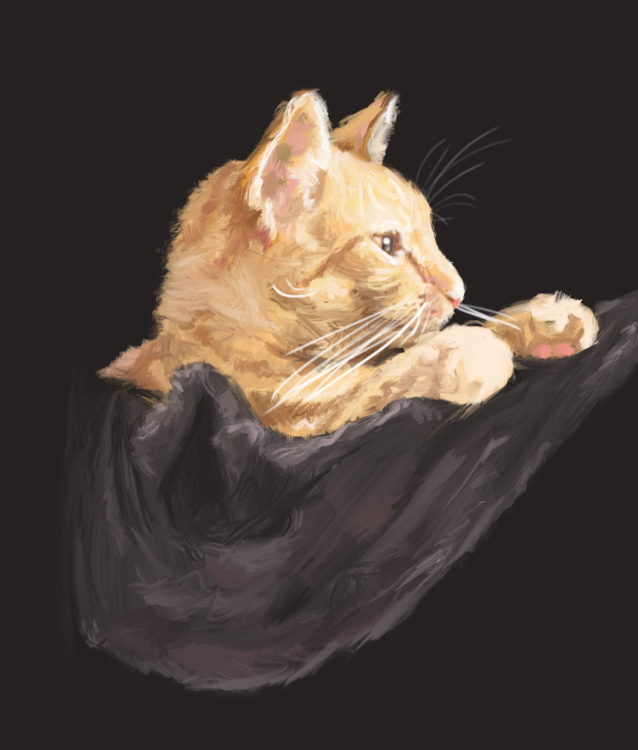 Stefanie-Odendahl_Sketch_cats_7.jpg