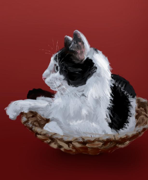 Stefanie-Odendahl_Sketch_cats_8.jpg