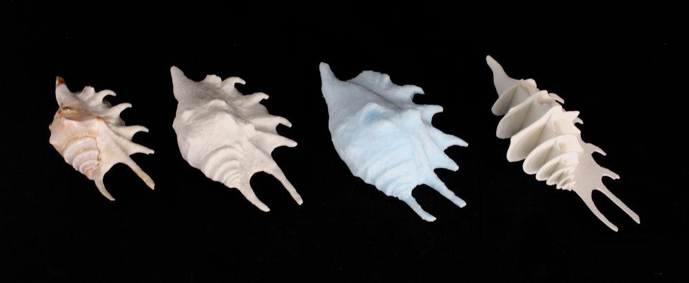shell4.jpg