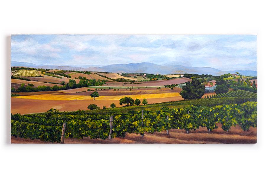 Vineyards near Cortona