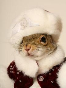 FunnySquirrelOutfits002.jpg