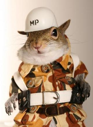 FunnySquirrelOutfits010.jpg