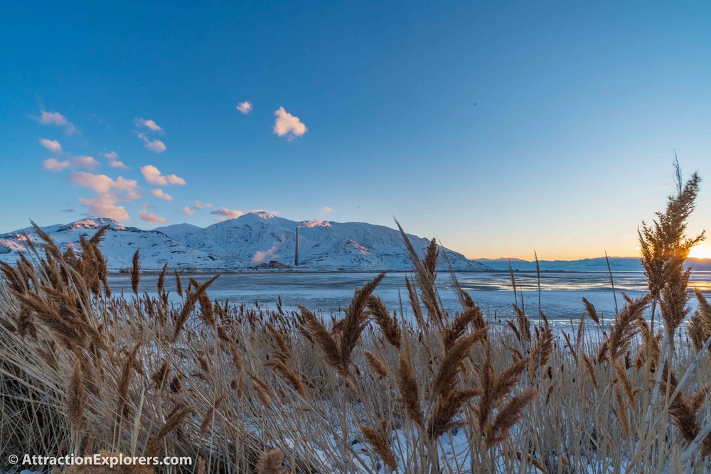 Great Salt Lake Tour bird wetlands