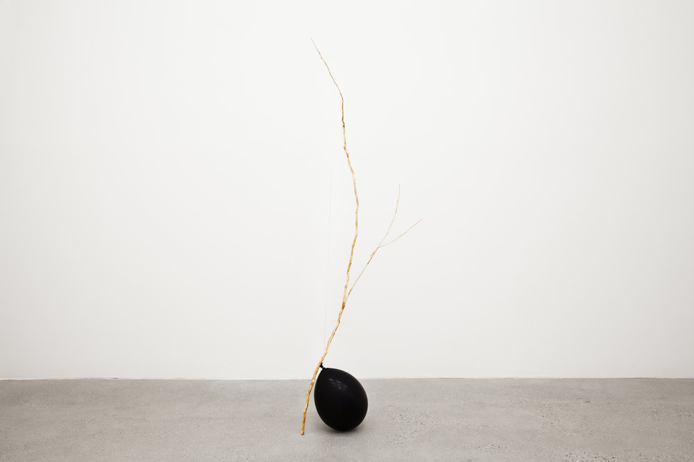 I see you Richard Foreman I see you , 2017, camphor tree branch, latex ballon, string, 53 x 1 in