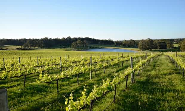 McHenry Hohnen vinyards at Margaret River, Western Australia.   (Photo cred: https://www.theguardian.com/travel/2014/nov/20/margaret-river-wine-route-western-australia)