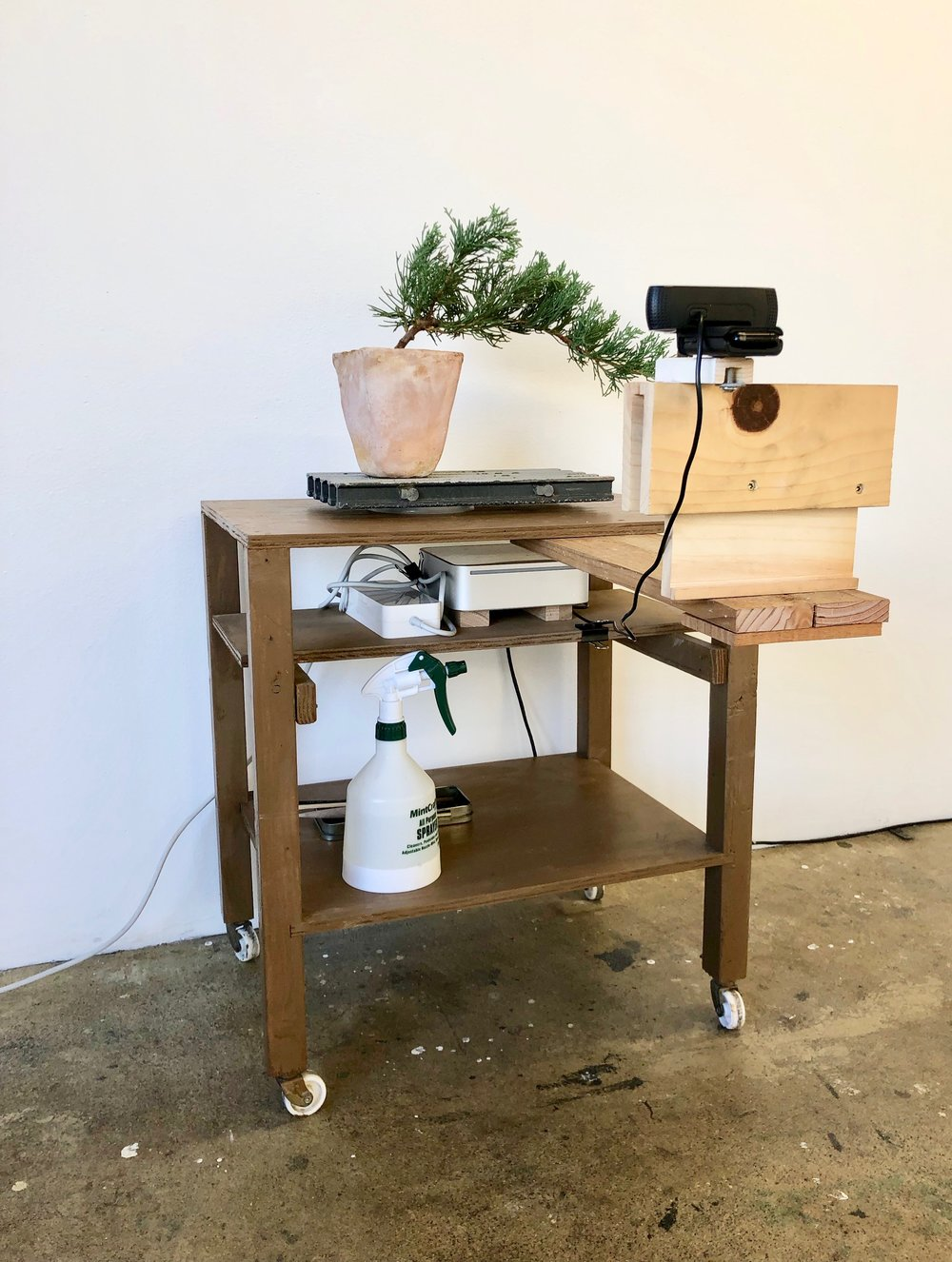 Bonsai Livestream, 2018, Cody Anderson