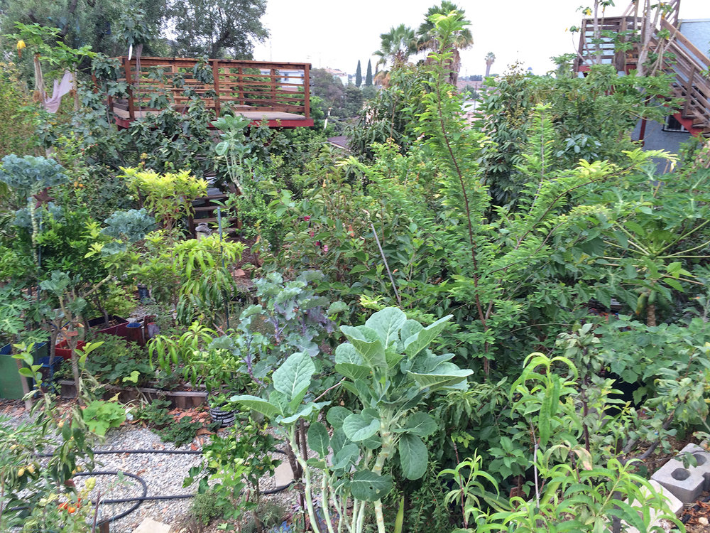 perennial edible garden in east los