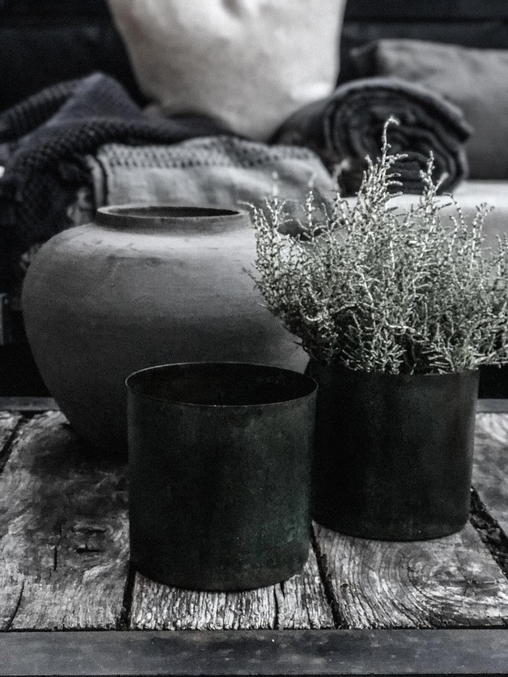passiflora_interior.jpg