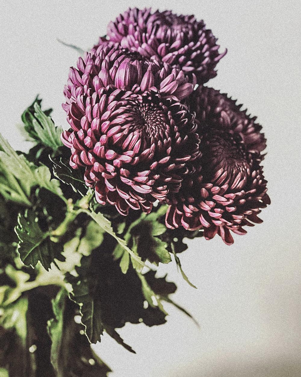 passiflora_blomst.jpg