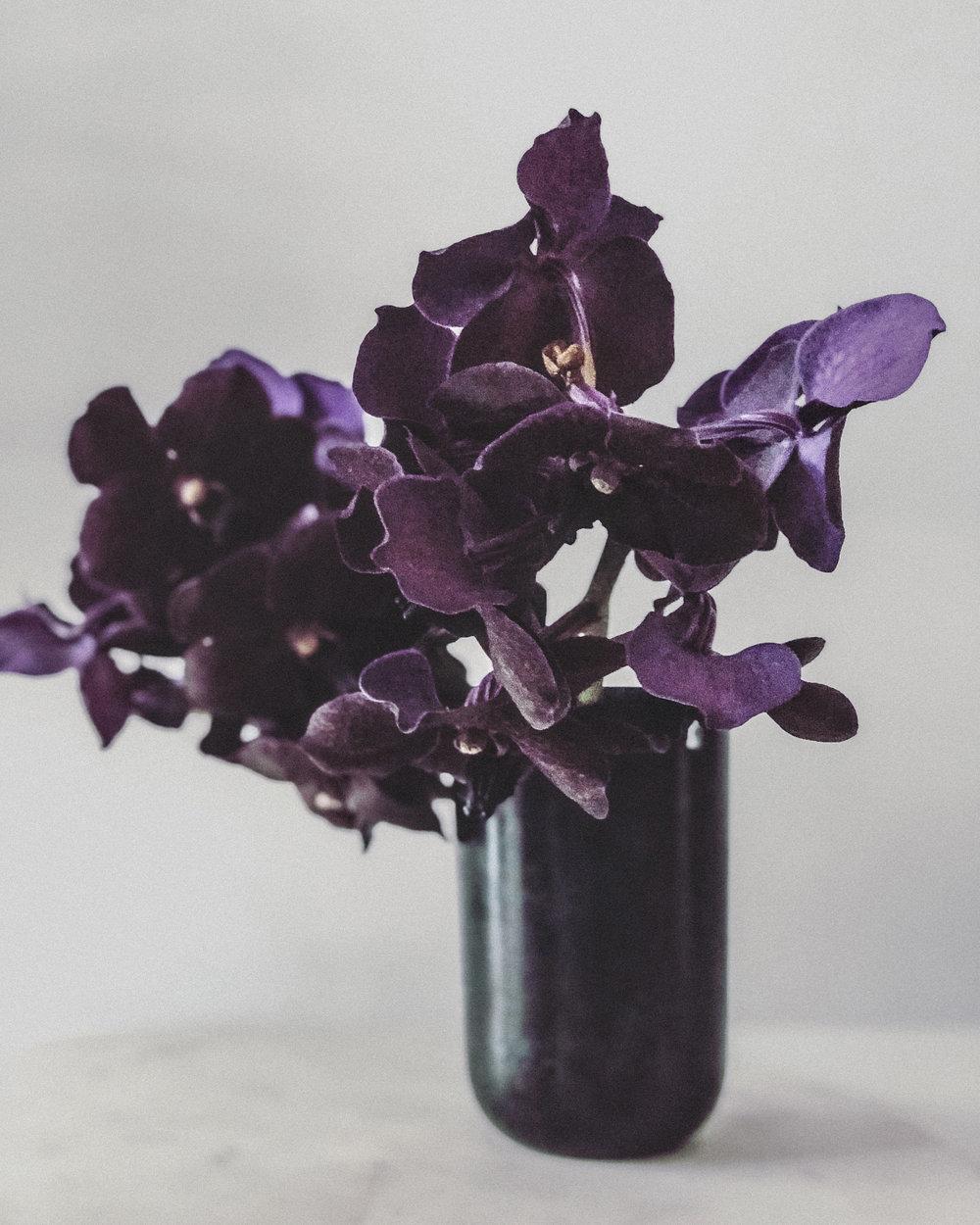 passiflora_orkide.jpg