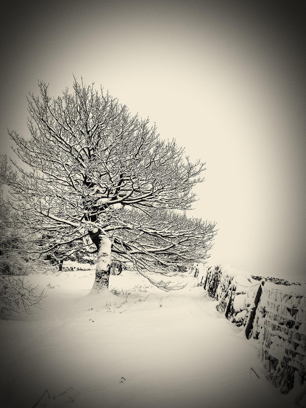 Snowscape_1