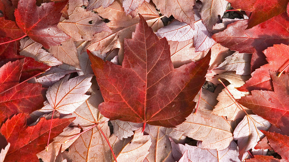 canada-nature-flag-wallpaper-22647-23263-hd-wallpapers.jpg