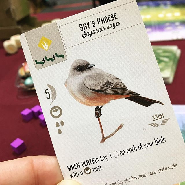 Not only is this gorgeous bird named after me, it also won me the game! 😍 🦅🦉🦆 After a couple more games of ‪#Wingspan‬, it's still as incredible as our first play. This game is so elegant and streamlined, but underneath the simple rules is a deep game full of difficult choices. 🦅🦉🦆 I've also found myself paying more attention to the birds I see, and wondering if maybe I've seen them in Wingspan. The thematic detail in this game may just entice you to start doing the same! . . . . #wingspan #wingspangame #wingspanboardgame #stonemaiergames #boardgamesofinstagram #boardgamephotography #boardgamephotos #tabletopphotography #boardgames #boardgame #boardgaming #boardgamenight #gamenight #boardgamegeek #analoggames #tabletop #tabletopgames #tabletopgaming #bgg #brettspiel