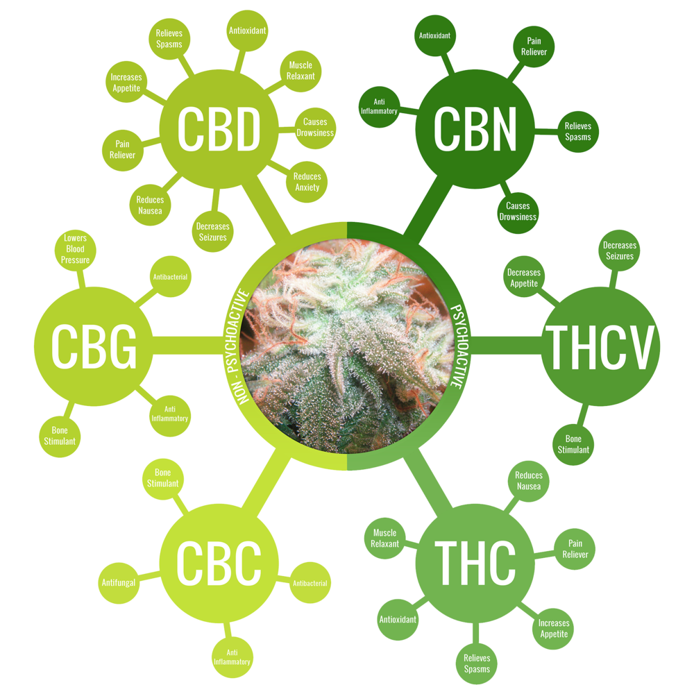 Cannabinoids such as CBD are highly beneficial to our endocannabinoid system