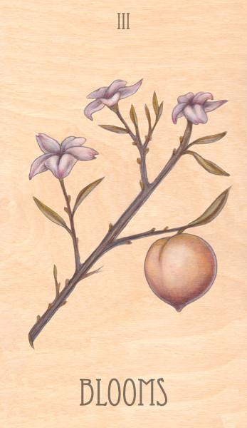 iii of blooms, 2014.