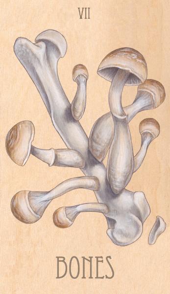 vii of bones, 2014.