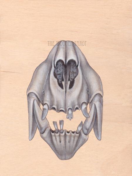 x of bones, 2014.