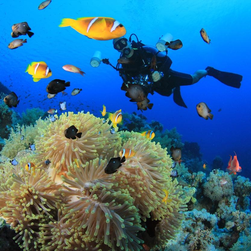 plongeur6.jpg