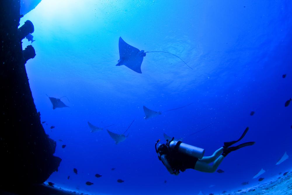 plongeur2.jpg