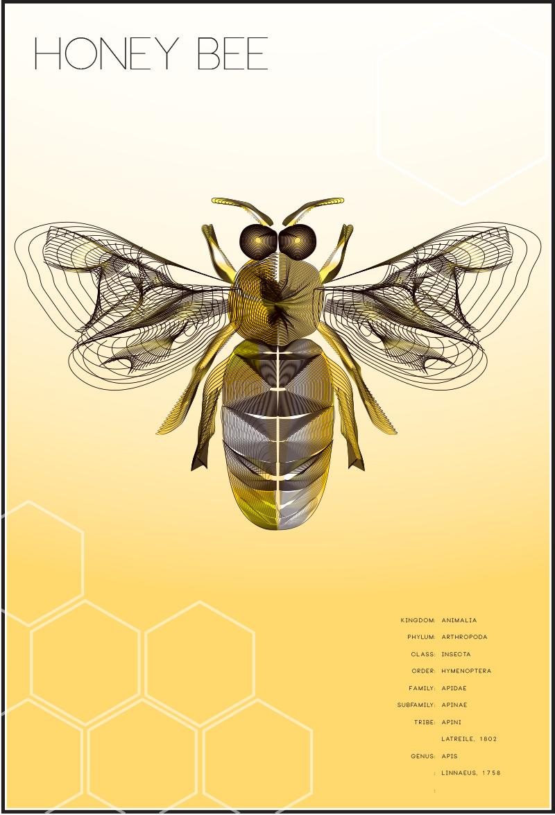 honey bee.jpg