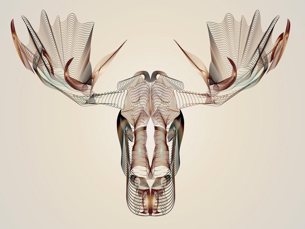 Moose-01.jpg