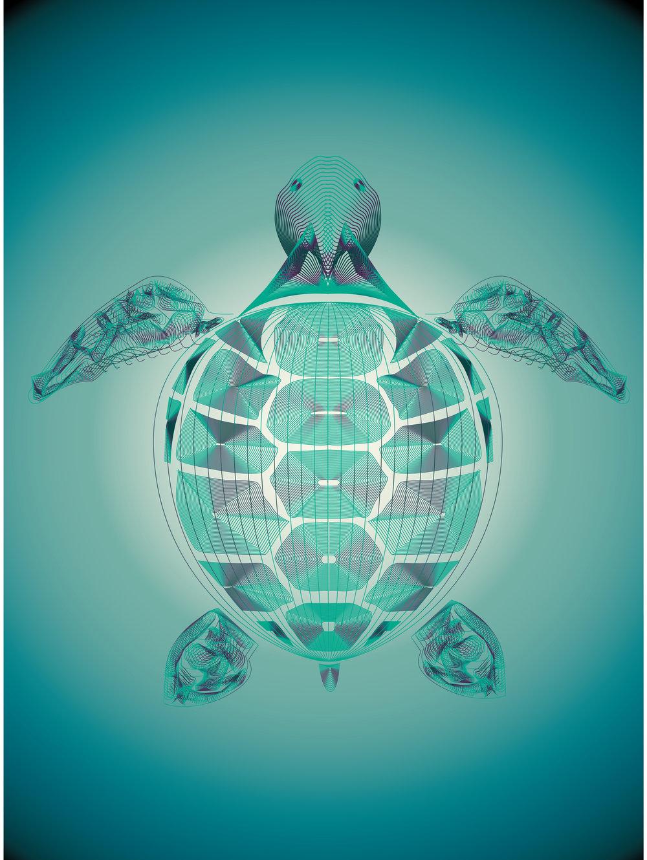 seas turtle-01.jpg