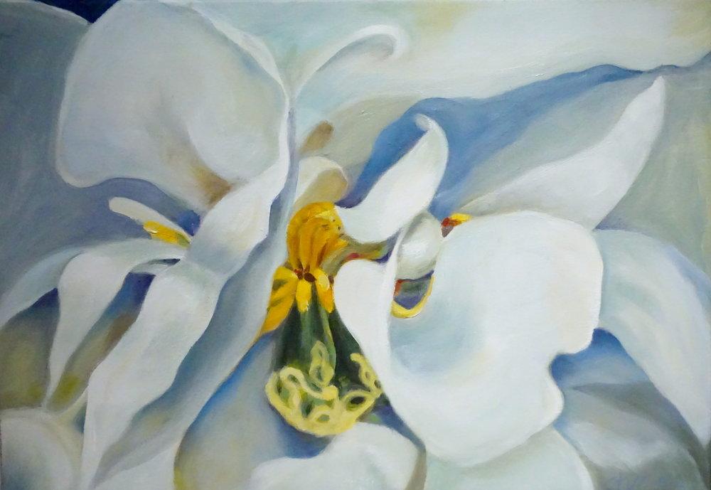 White tulip 1.JPG
