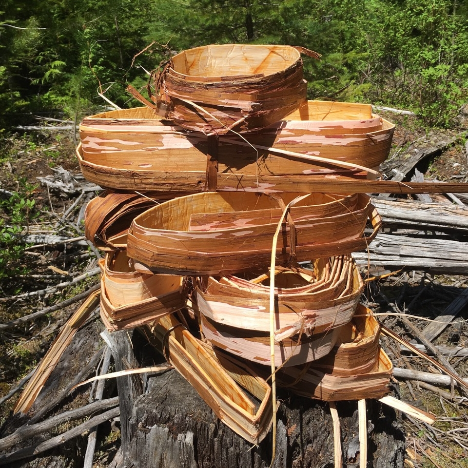 Freshly gathered rounds of Cedar bark