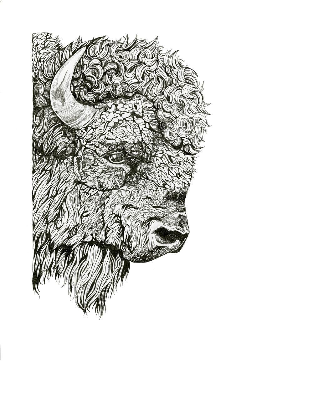 Bison Bison Bison - 19 X 14.5felt-tipped pen on bristol paperprints available on request