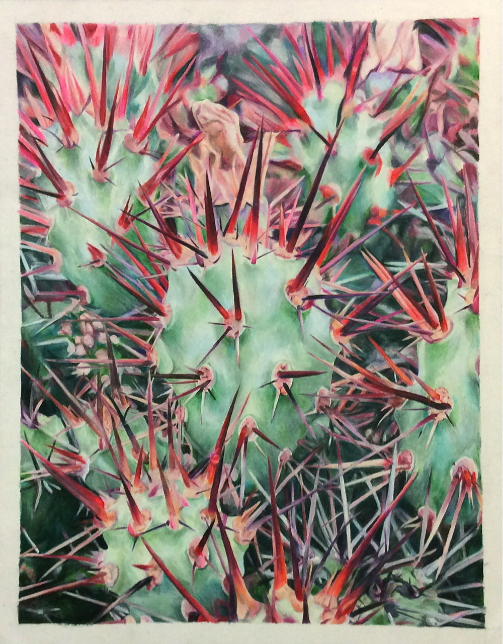 unidentified cactus - 13.75 X 10.75colored pencil on bristol paperprints available on request