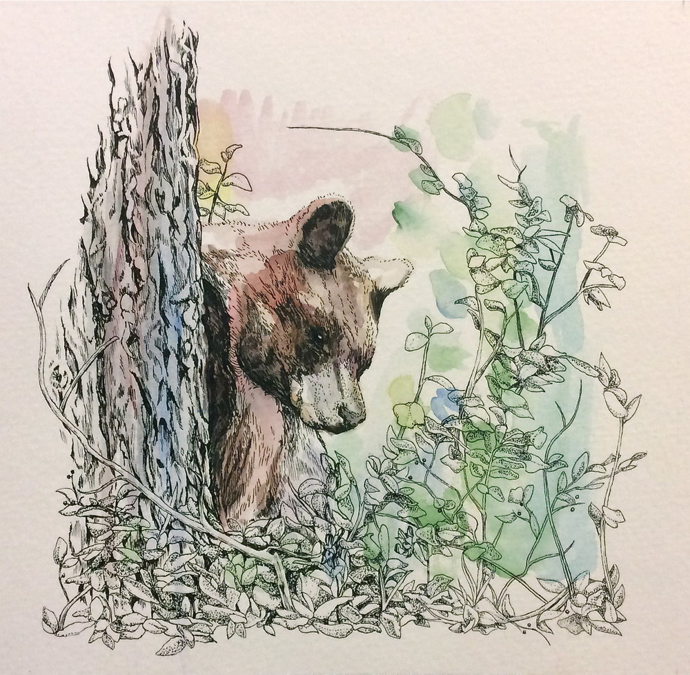 bear - 7 X 7.25felt-tipped pen and watercolor on watercolor paperprints available on request