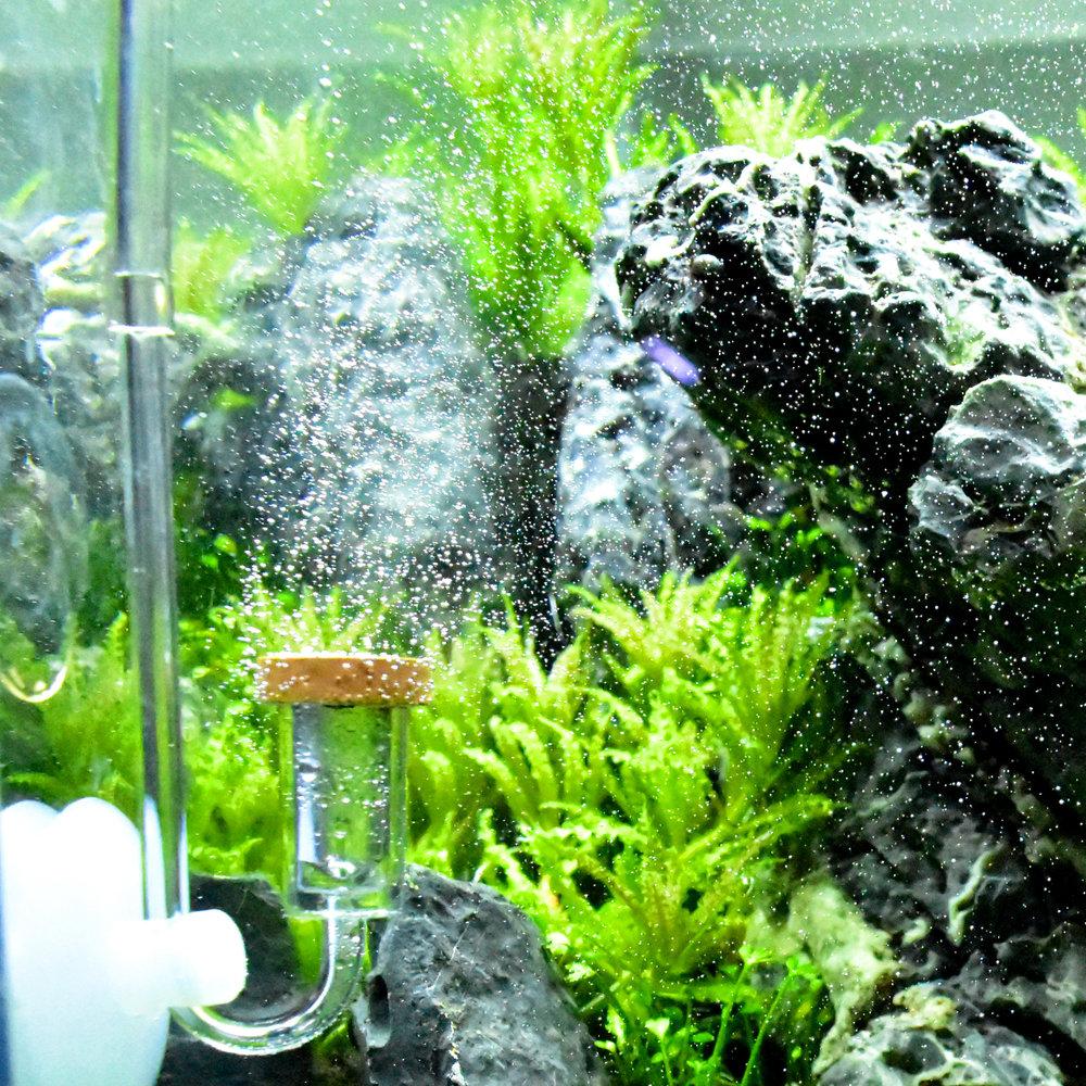 co2 tubing brooklyn hardscape aquascape supply