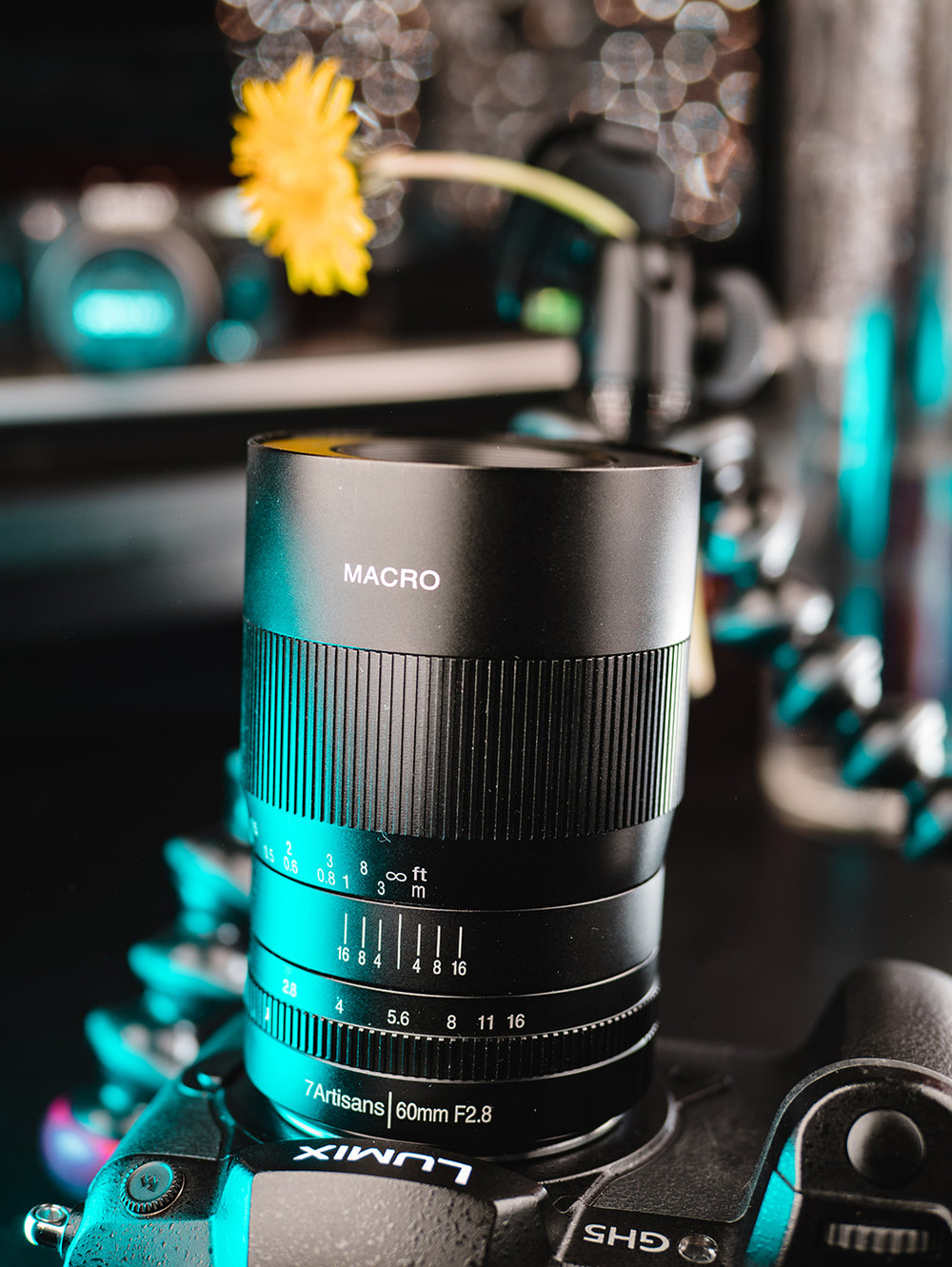 macro lens photos-6.jpg