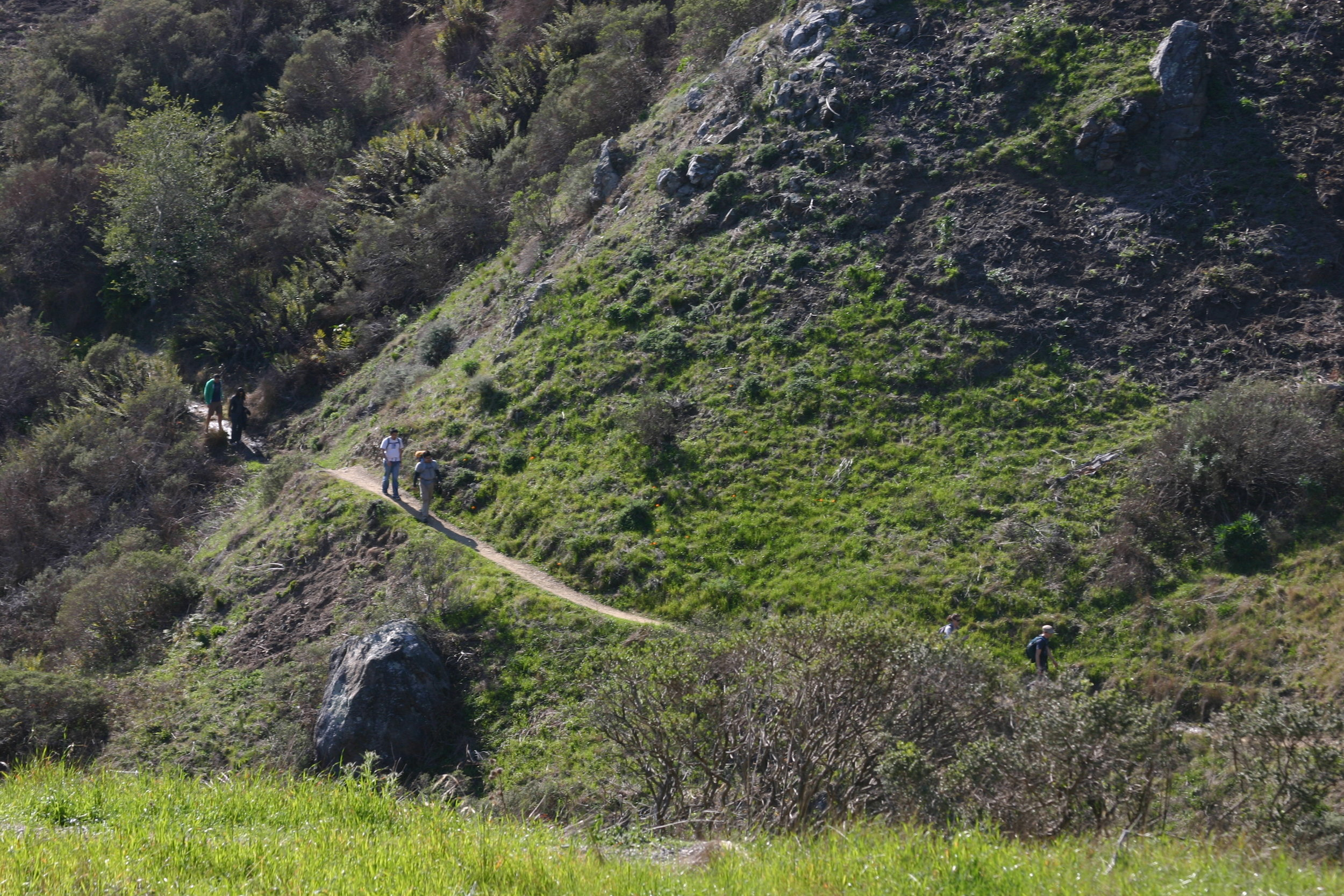 Slopes of Mt. Tam, Marin, California, February 2012, Photo Credit: Kate Gallery