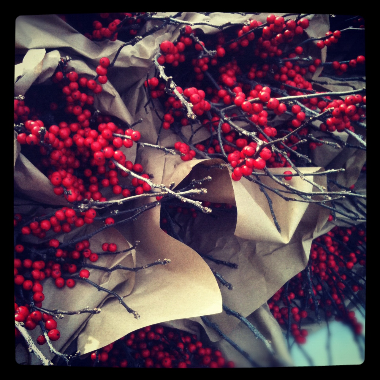 christmas season 2012, washington, dc