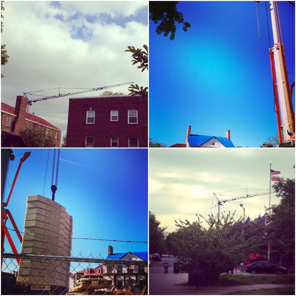 cranesmaples.jpg