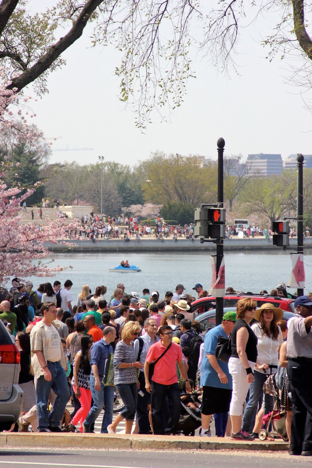 Cherry Blossoms DC, April '14, Credit: Kate Gallery, Neighborhood Nomads
