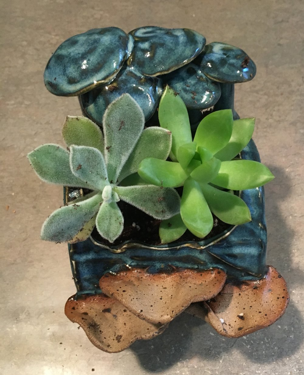 Introducing - My Succulents