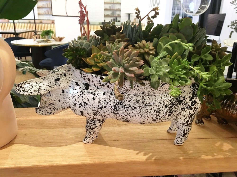 The Rialheim Pig Bowl in Splatter White styled by Little Succulent Co.