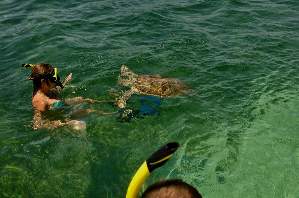 My new friend! Hello Mr Turtle