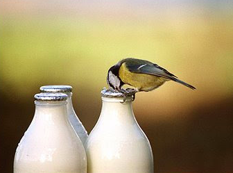 Watch out for those birds! They love a sip.