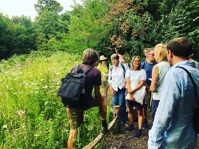 Loving our wild plant walk this evening. #loveyourenvironment